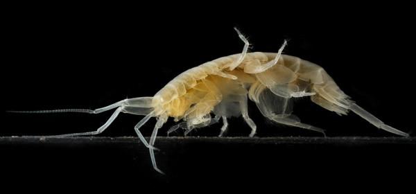 নতুন অমেরুদণ্ডী প্রাণীর সন্ধান দিলেন বাংলাদেশি গবেষক
