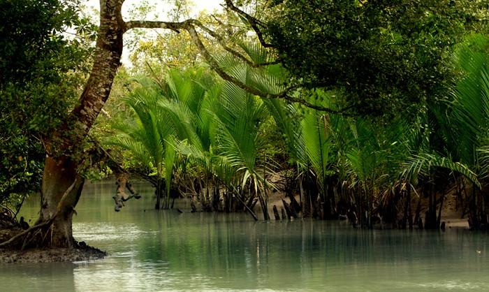 বাংলাদেশে মোট আয়তনের ১১ দশমিক ২ শতাংশ বনভূমি: এডিবি